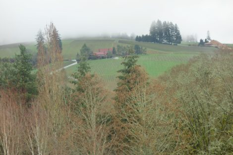 Dundee Hills Willamette Valley View